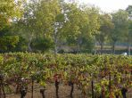 Vineyard House. Cruzy. Languedoc. Property. Holiday. Vineyard.