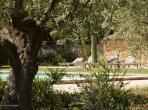 Beautifully renovated farmhouse with 5 bedrooms located 5 minutes from Eygalieres in Provence. Extensive grounds and private pool, sleeps 10. (EYGA122EE)