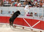Bull training, toro piscines