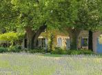Rustic country house, with large beautiful pool close to St Remy de Provence. Sleeps 12. (SRDP137EE)