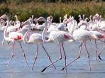 St Pierre-la-Mer beach house rental visit propery holiday flamingoes wonderful