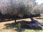 Traditional Provencal farmhouse located near Uzes with private pool, large beautiful grounds and 5 bedrooms sleeping 12 people.  (UZES110)